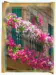 Цветы для балкона