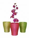 Горшки и кашпо для орхидей оптом