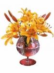 Луковичные цветы (весенние)