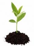 Почва и удобрения для цветов оптом