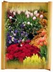 Саженцы цветов (корневище)