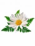 Семена цветов оптом
