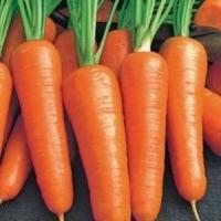 Морковь Роял Шансон (20 шт/упак) оптом