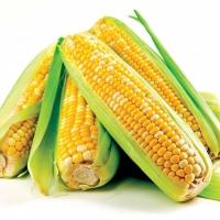 кукуруза куликовская