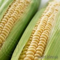 """кукуруза """"оверленд"""""""