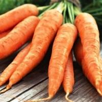 морковь карнавал