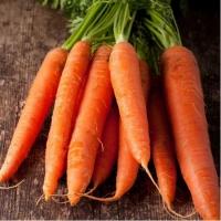 "морковь ""каротан"" поздняя"