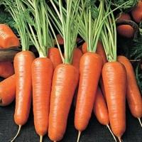 "морковь ""роял шансон"""