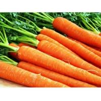 Морковь Королева Осени (20 шт/упак) оптом