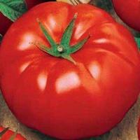 помидор украинский гигант