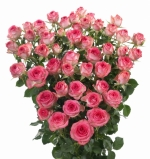 Мелкоцветковая роза Lovely Lydia (Лавли Лидиа)  (4 шт/упак.) оптом