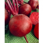 Свекла Округло Темно-Красная (20 шт/упак) оптом