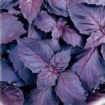Базилик Темный Опал фиолетовый (20 шт/упак)