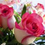 Роза чайно-гибридная Инджой (5 шт/упак)