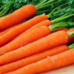 Морковь Лисичка-сестричка (20 шт/упак) оптом
