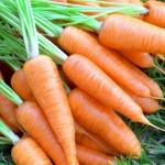 """морковь """"курода шантане"""""""