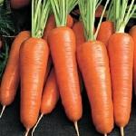 морковь московская позняя