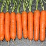 морковь памела