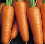 Морковь Шансон Супер (20 шт/упак.) оптом