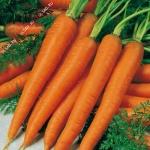 "морковь ""вита лонга"""