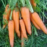 Морковь Вита Лонга 1 (0 шт/упак)
