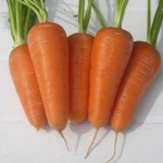 Морковь Аленка (20 шт/упак.) оптом