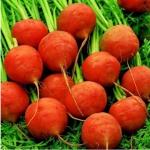 Морковь комнатная Парижский рынок (20 шт/упак) оптом