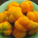Перец Ратунда желтая (20 шт/упак) оптом