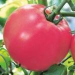 помидор малиновый картофель
