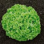 Салат Снежинка (20 шт/упак) оптом