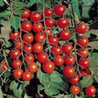 """томат """"гармони"""" f1 черри"""